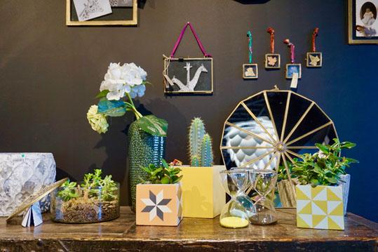 Nos_selections_plante_interieur_petites_girafes