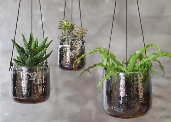 Nos_selections_restez_zen_plante_petites_girafes